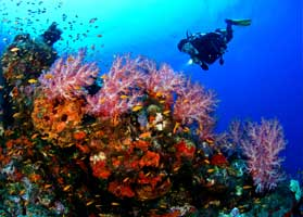 Dive to see the Malaysia's colorful coral reefs