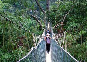 Take a professional tour of the rainforest in Taman Negara
